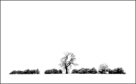 White Space: A Photographic Landscape